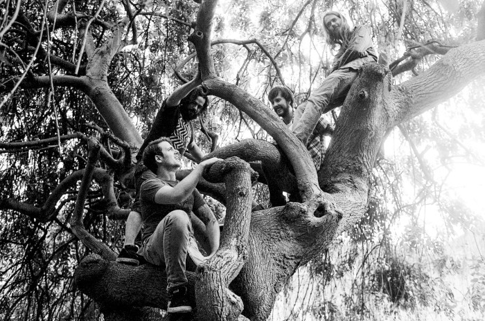 elephant tree 5
