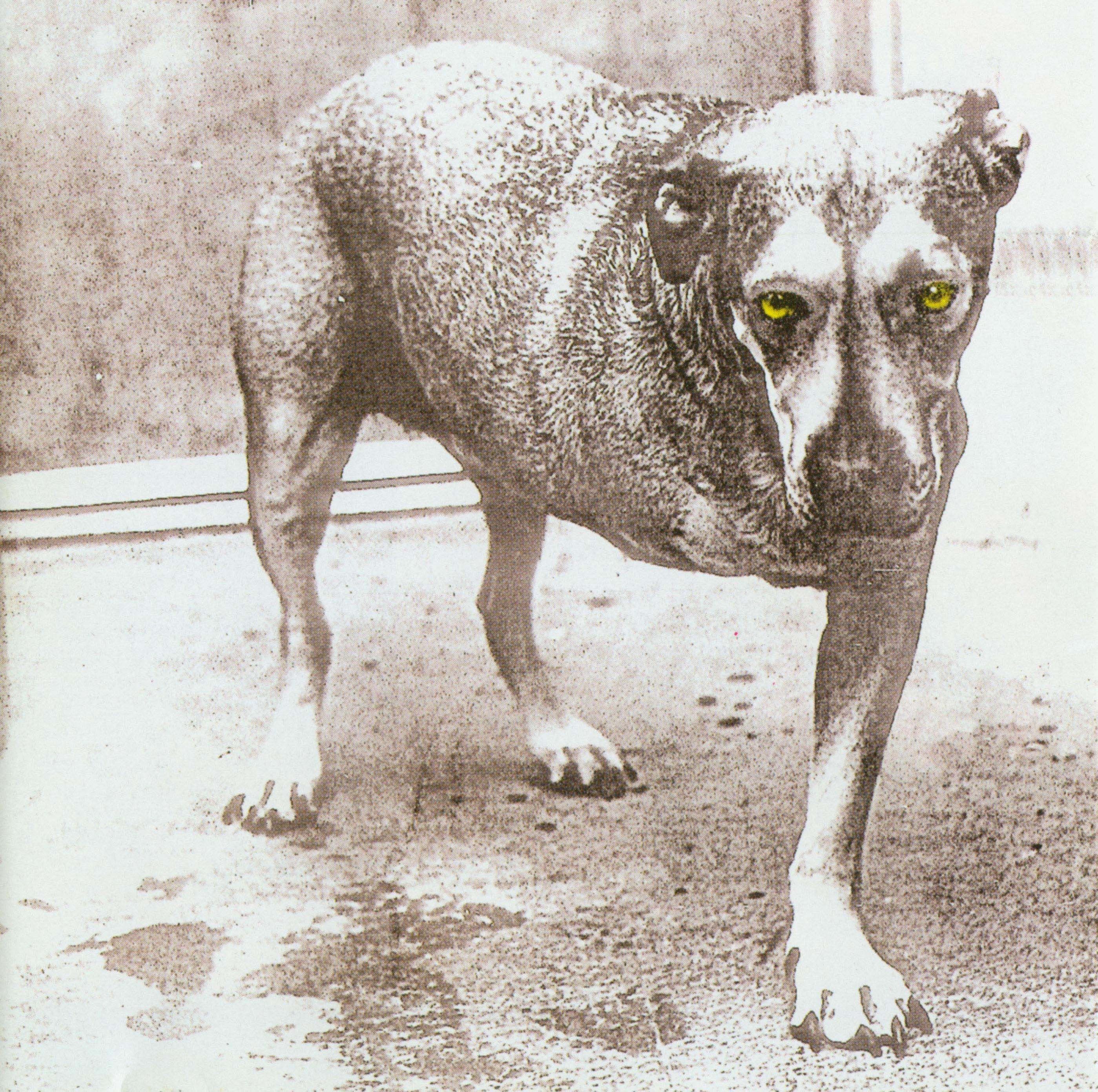alice in chains self titled
