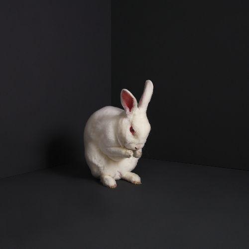 brume rabbits