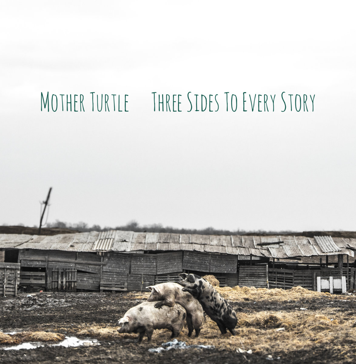 mother turtle three sides to every story