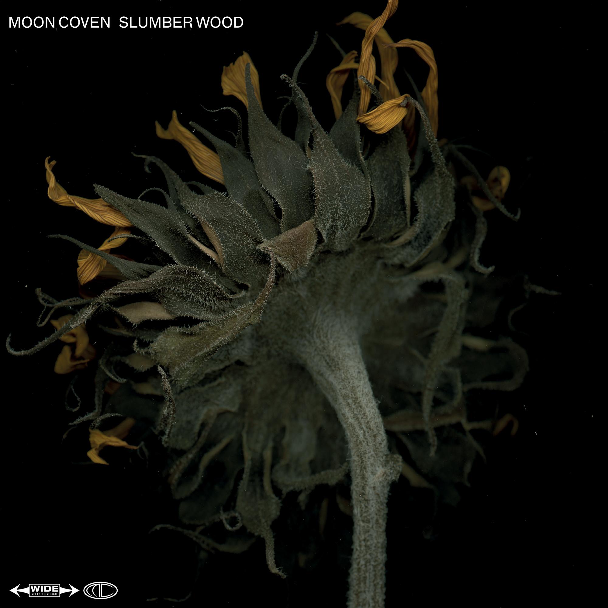 moon coven slumber wood